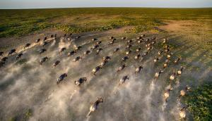 andBeyond Close Up Wildebeest Great Migration