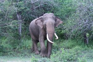 Chena Huts Elefant