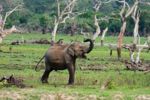 Chena Huts by Uga Escapes Elephant in Yala