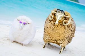 Finolhu Beachlife Schafe