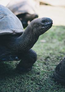 Raffles Seychelles Lifestyle Tortoise