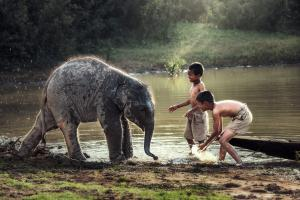 Sens Asia Travel Laos Boys playing with elephant