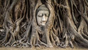Sens Asia Travel Thailand Head of Buddha statue Ayutthaya