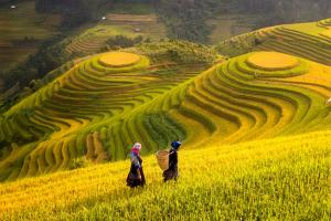 Sens Asia Travel Vietnam Rice Terraces Mu Cang Chai