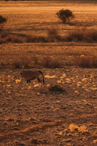 Sonop Outdoor Wildlife Antilope © Zannier Hotels