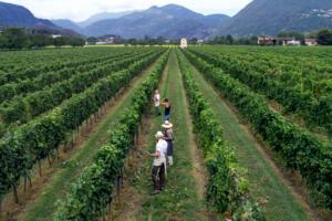 Terreni alla Maggia Field Harvesting