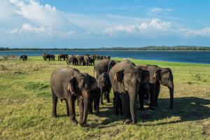 Ulagalla by Uga Escapes Elephants at Minneriya